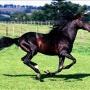 chevaux67280